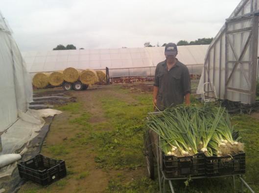 josh green garlic